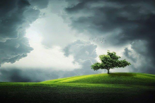 jaka ziemia do traw ozdobnych